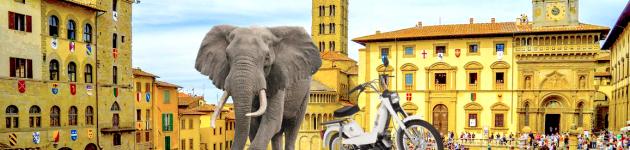 Pourquoi éléphant ? Chronique d'un titre absurde
